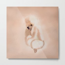 Elegant Standard White Poodle Mixed Media Metal Print