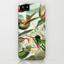 Haeckel Trochilidae iPhone Case