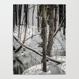 Winter Woods & Creek Poster