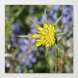 Yellow salsify wildflower against lupine Canvas Print