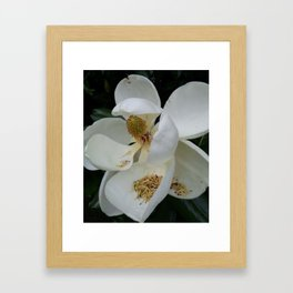 Magnolia in the South Framed Art Print