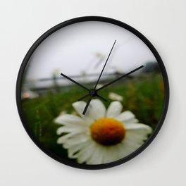 Arcadian Daisy Wall Clock