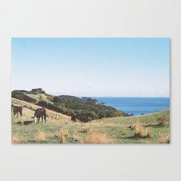 Waiheke Canvas Print