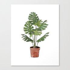 Philodendron Selloum Canvas Print