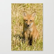 Red Fox kit Canvas Print