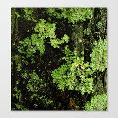 Textures - Moss Canvas Print