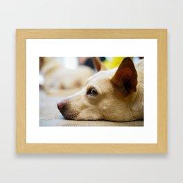 Ears Up! Framed Art Print