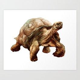Tortoise Tiptoes Art Print