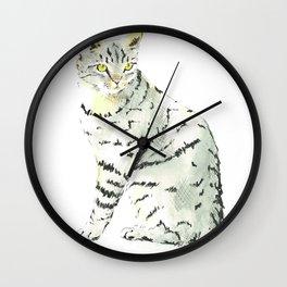 beware of tabby cat contemplating Wall Clock