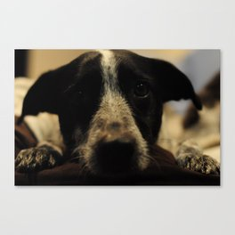Worrywart Canvas Print