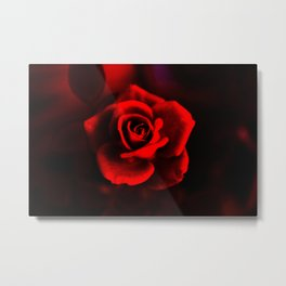 Red rose on red Metal Print