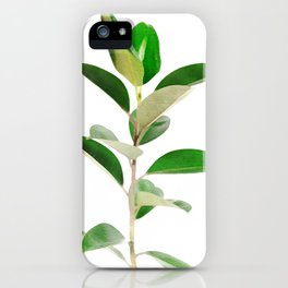 Ficus elastica iPhone Case