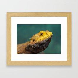 Bearded Dragon 2 Framed Art Print