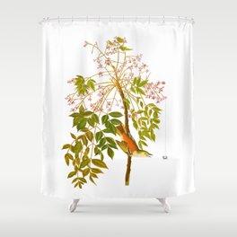 White-eyed Flycatcher, or Vireo Bird Shower Curtain