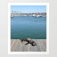 Sea Lion Smile Art Print