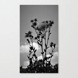 Flower Field View Canvas Print