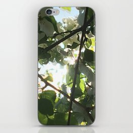 Light Through Leaves iPhone Skin