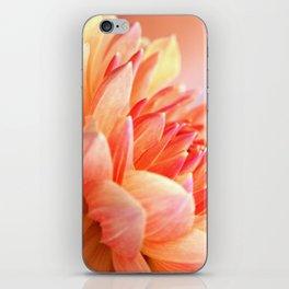 Dahlia Glow Macro iPhone Skin
