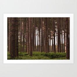 Forest Landscape - Nature Photography Art Print