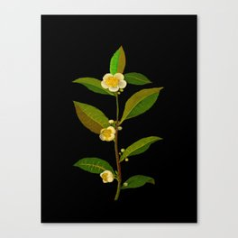 Thea Viridis Mary Delany Floral Flower Paper Collage Delicate Vintage Black Background Botanical Canvas Print