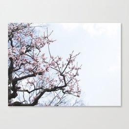 PLUM BLOSSOMS Edition04 Canvas Print