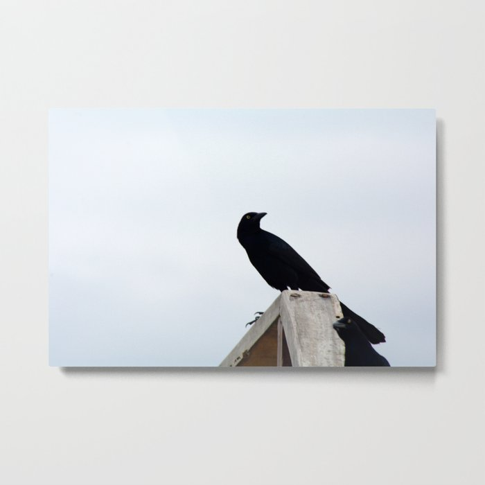 Bird collection _03 Metal Print