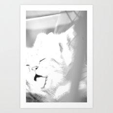 Bliss Kitten 1 Art Print