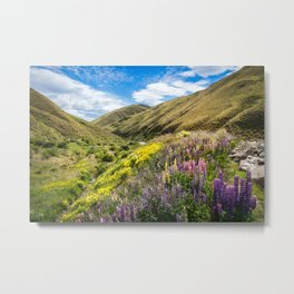 Lupines fields on the side of the road in New Zealand Metal Print