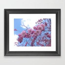 Cherry Tree Blossom Framed Art Print