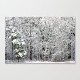 Snowy Swampland Canvas Print