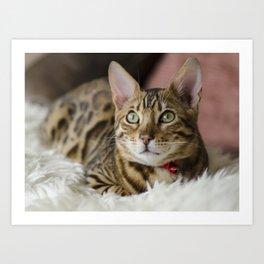 Spoiled Tiger Art Print
