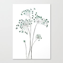 wild carrot watercolor Canvas Print
