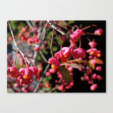 Pink and Orange October Fruits Canvas Print