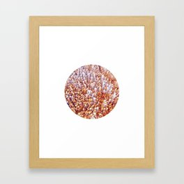 Freezing Oranges Framed Art Print