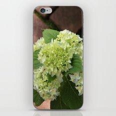 Hydrangea Walk iPhone & iPod Skin