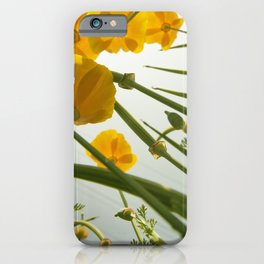 Looking Through Yellow Daisies to the Sky iPhone Case