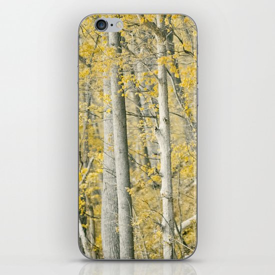 Amber Forest iPhone & iPod Skin