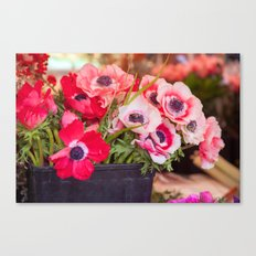 Anemones  and Bumblebee 5946 Canvas Print