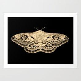Gold moth on black Art Print