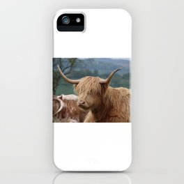 Portrait of Highland Cattle iPhone Case