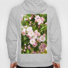 the Apple trees in bloom Hoody