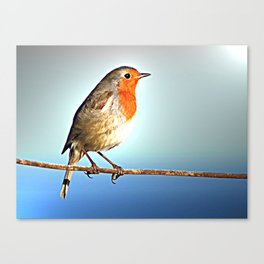 Robin Bird on Wire, Lonely Love Blue Photography Canvas Print