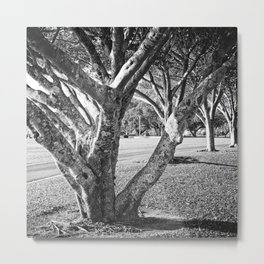 Row of trees in black and white Metal Print