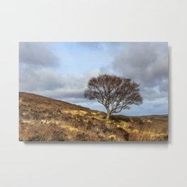 Hillside tree Metal Print