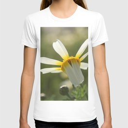 Loves me, loves me not daisy T-shirt