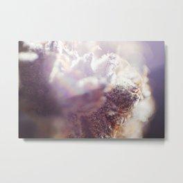 cannabis 01 Metal Print