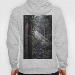 Muir Woods Crepuscular Rays Hoody