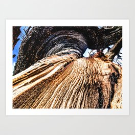 Twisted Trunk // Close up Tree Photography Wood Grain Forest Branches Outdoor Nature Decor Art Print