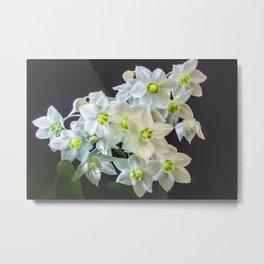 Amazon lily Metal Print