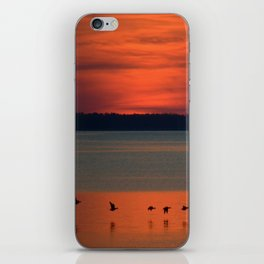 A flock of geese flying north across the calm evening waters of the bay iPhone Skin